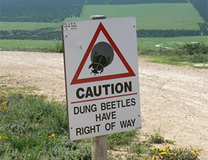 Addo Elephant Park dung beetles
