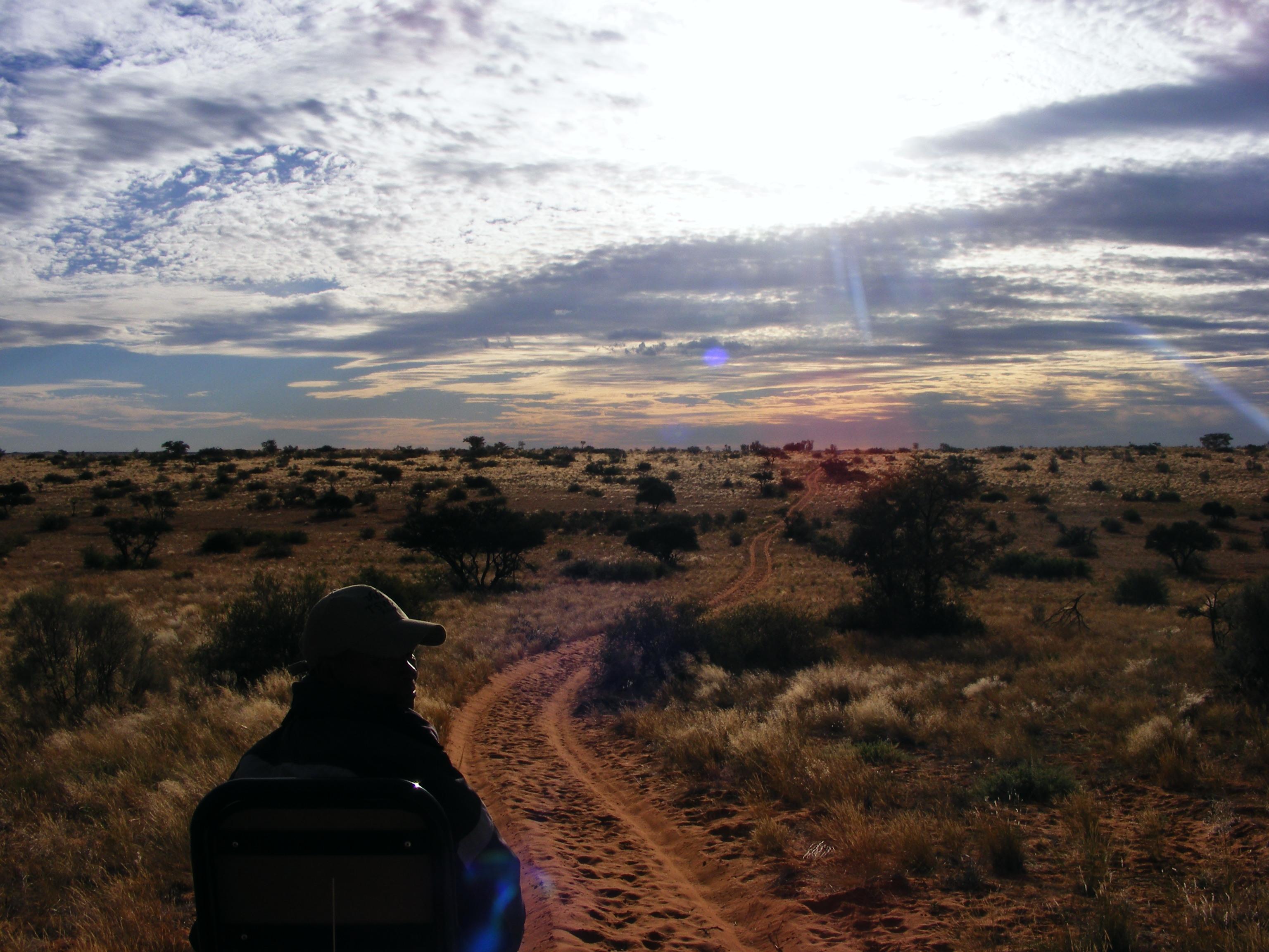 Meerkat at Tswalu Kalahari