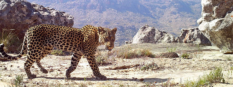 Cape Leopard Trust - See You in Africa south africa charities