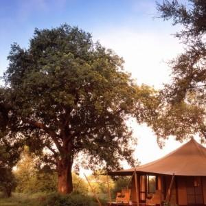 Ngala tented camp botswana